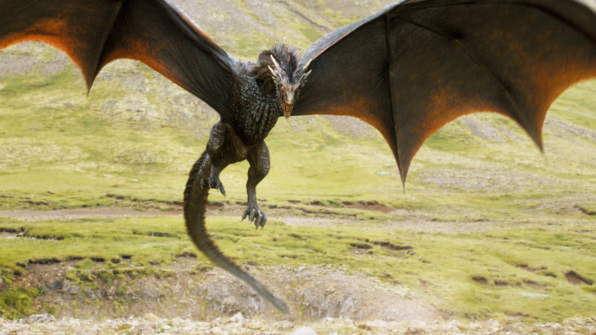 A dragon from HBO's Game of Thrones