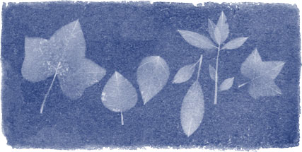 Images of leaves reminiscent to Anna Atkins' photography book are seen in a new Google Doodle. March 16, 2015