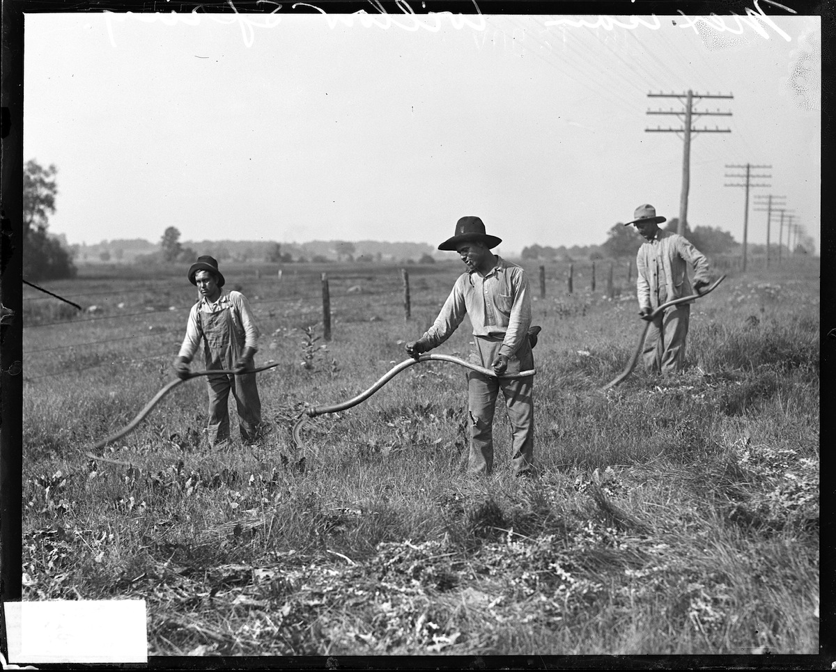 Image of Mexican immigrants working with sickles to cut weeds along the side of a road outside of Chicago in 1917