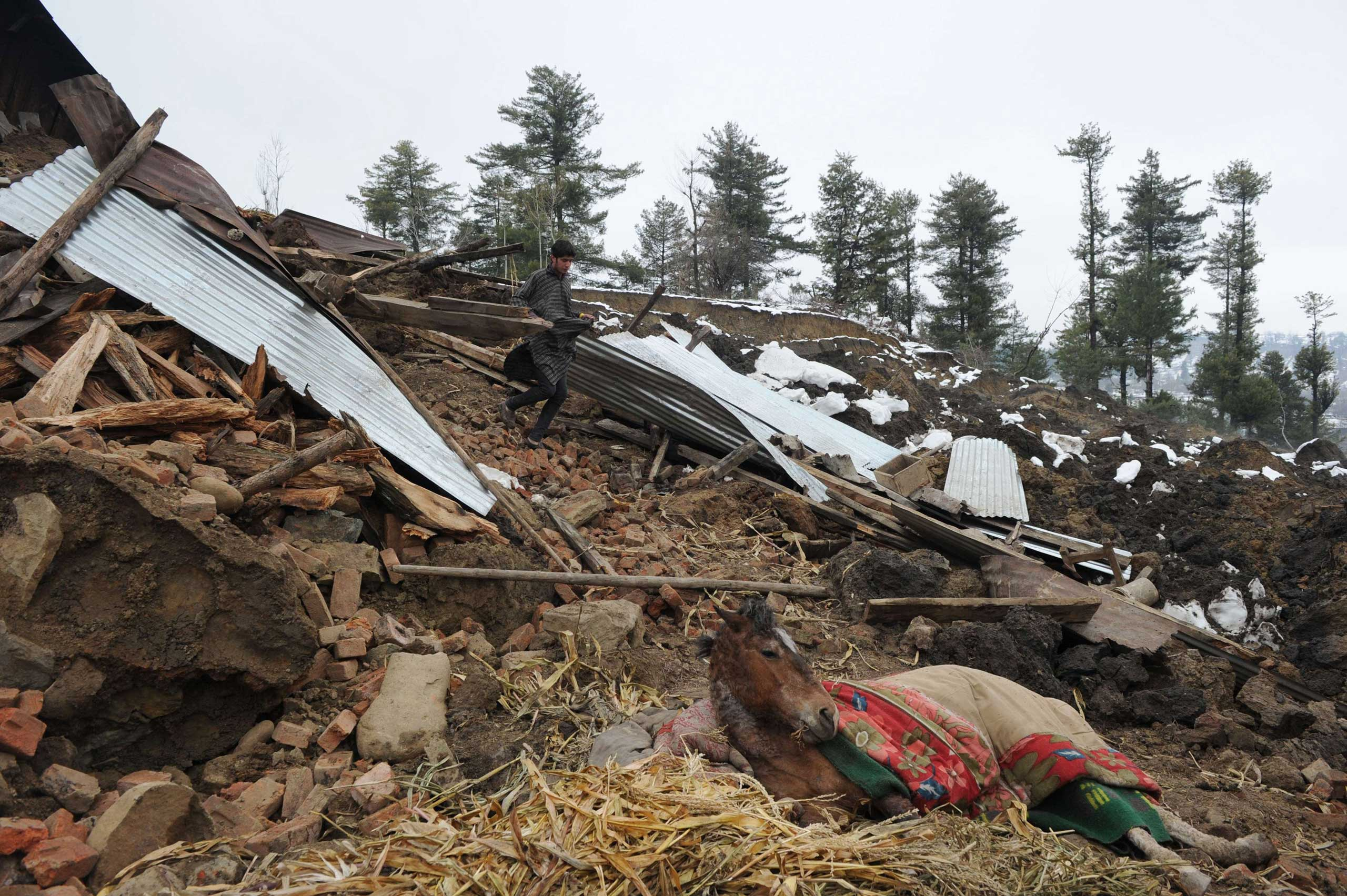 A Kashmiri villager walks near an injured horse close to a damaged house in the village of Laden following a landslide due to heavy rainfall on March 30, 2015.