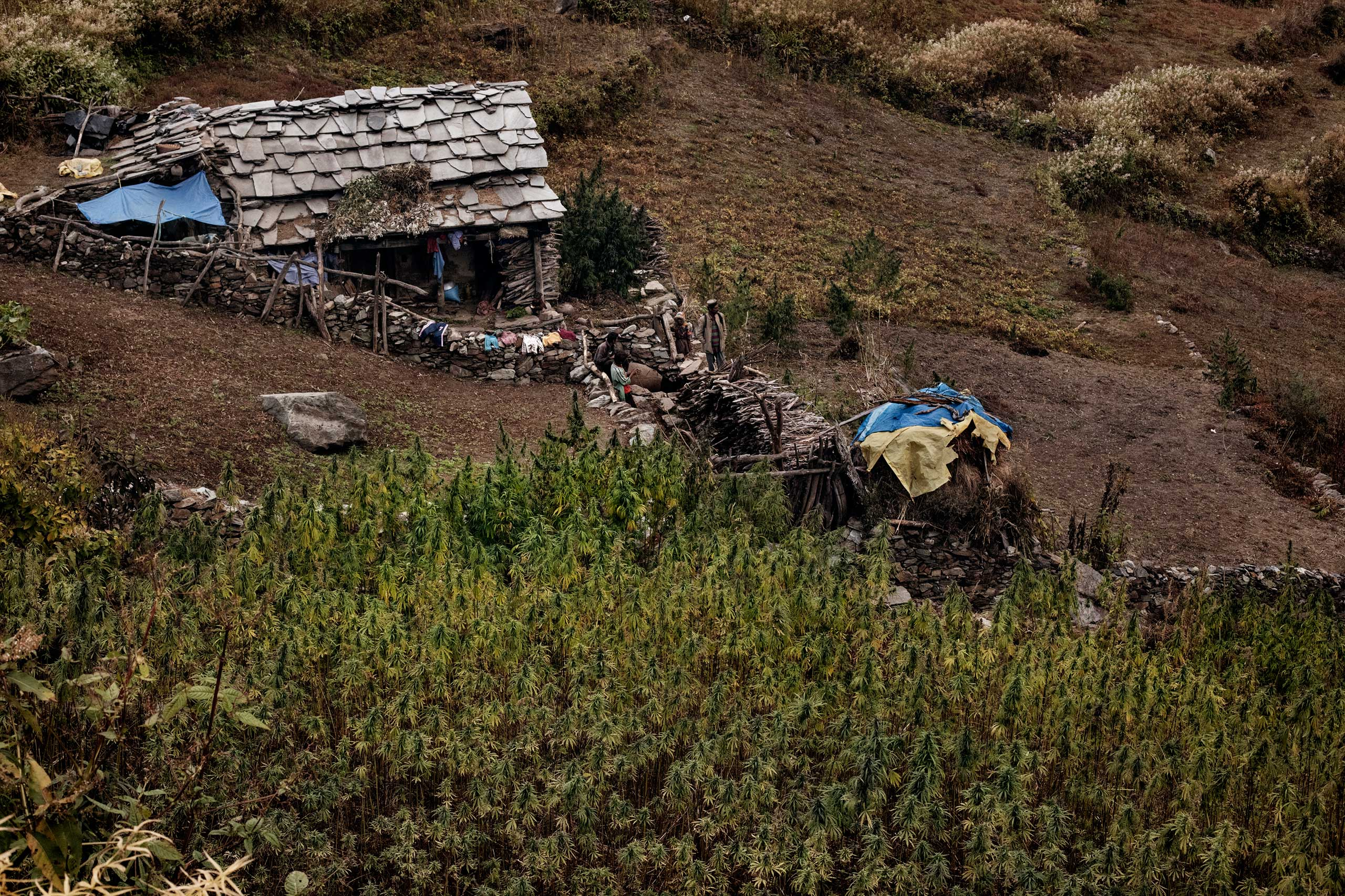 A field house by a cannabis plantation in Oct. 2013.