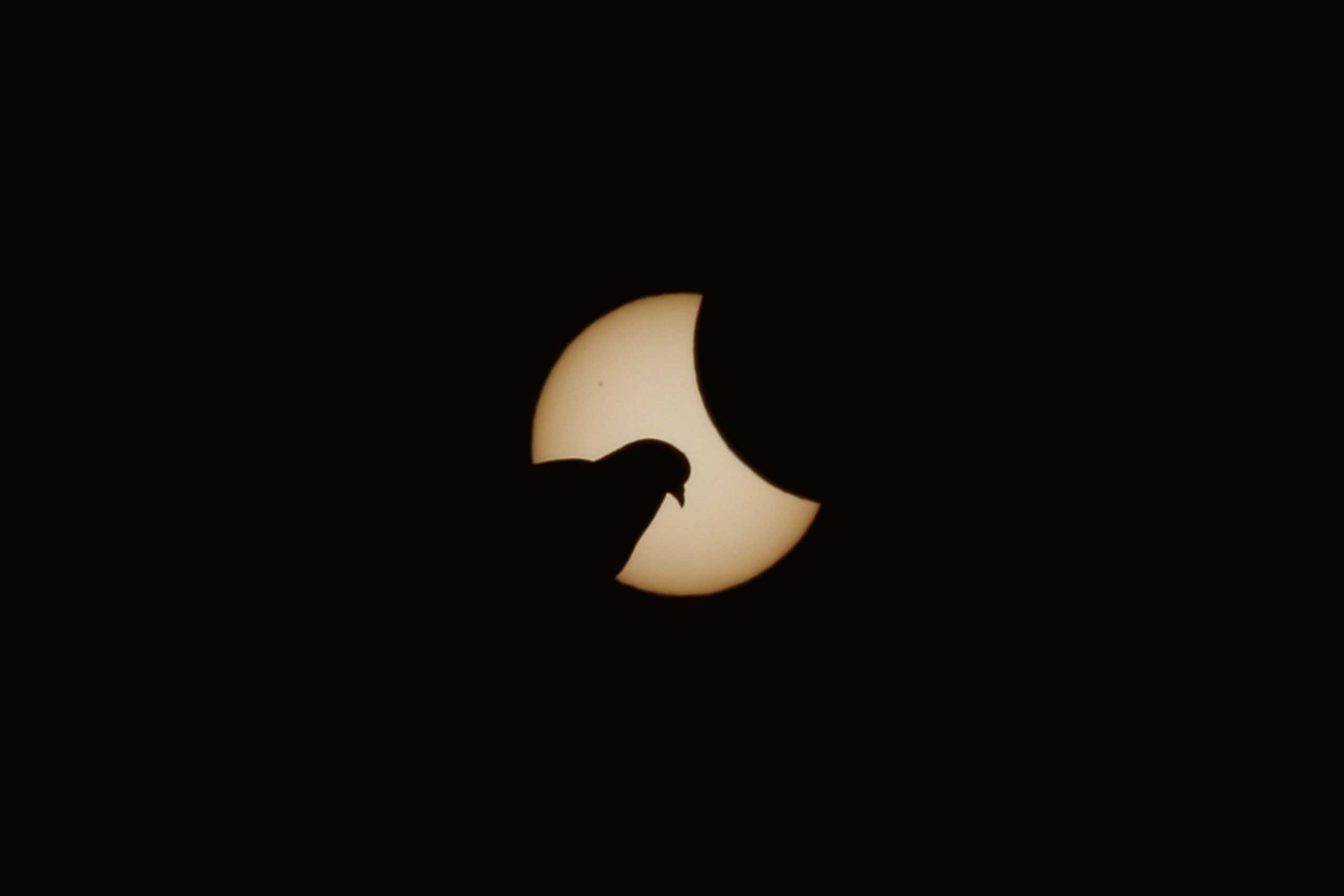 A dove is pictured  in front of the sun during a partial solar eclipse in Munich on March 20, 2015.
