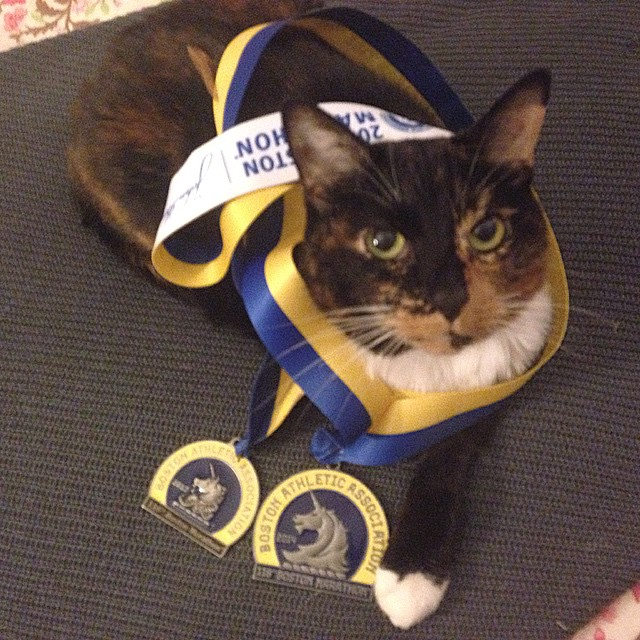 George the Cat shared this photo, saying  Happy Marathon Monday!  Wearing mom's old Boston Marathon medals from 2012 and 2014 in honor of this special day.  No running for her today, she'll be cheering loud on the sidelines this year.  This is absolutely the best day to be a Bostonian!  Boston beautiful, Boston proud, #BostonStrong. #thinkingaboutrunningmakesmetired #readyforanap