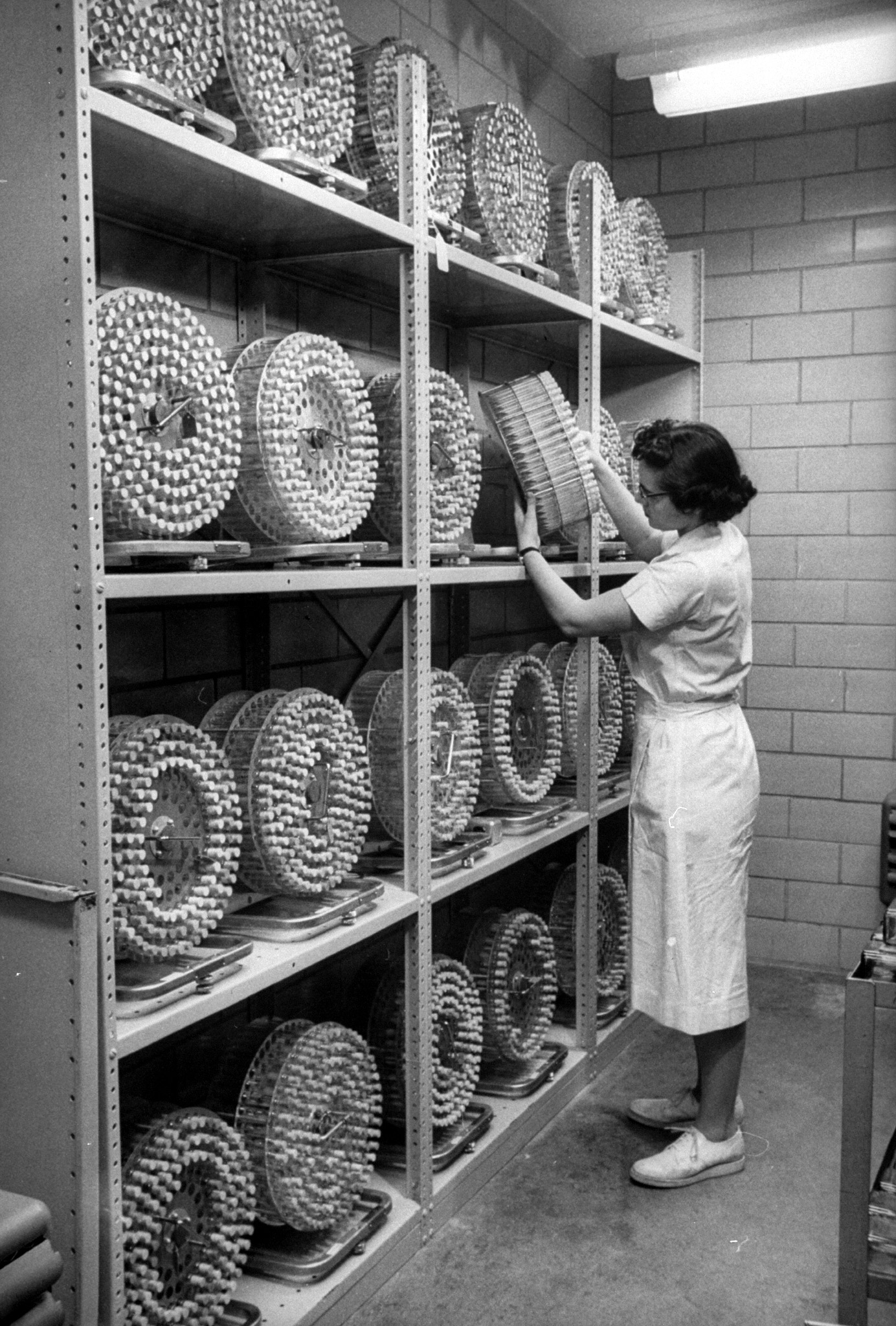<b>Caption from LIFE.</b> In incubator room, test tubes of vaccine samples rotate slowly in drums for seven days under controlled temperature. The samples are then analyzed.