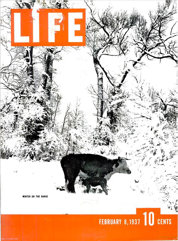 February 8, 1937 LIFE Magazine cover (photo by Charles J. Belden).