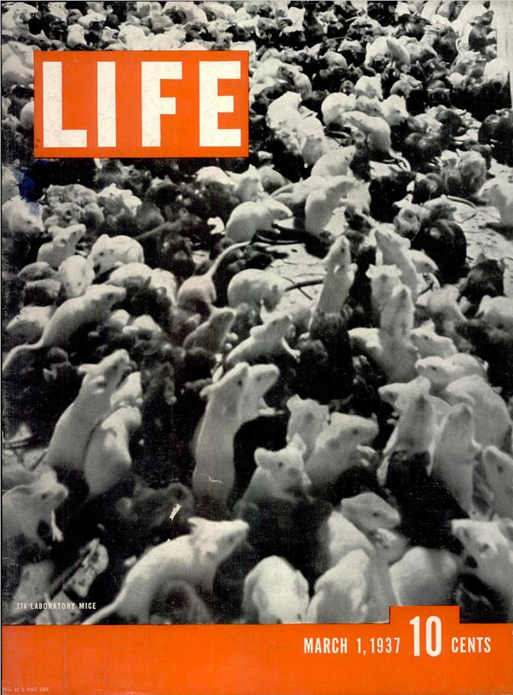 March 1, 1937 LIFE Magazine cover (photo by Henry M. Lester).