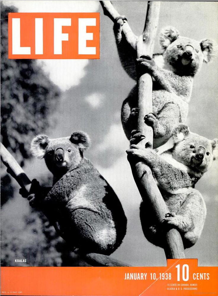 January 10, 1938 LIFE Magazine cover (photo by Lane Flinders).