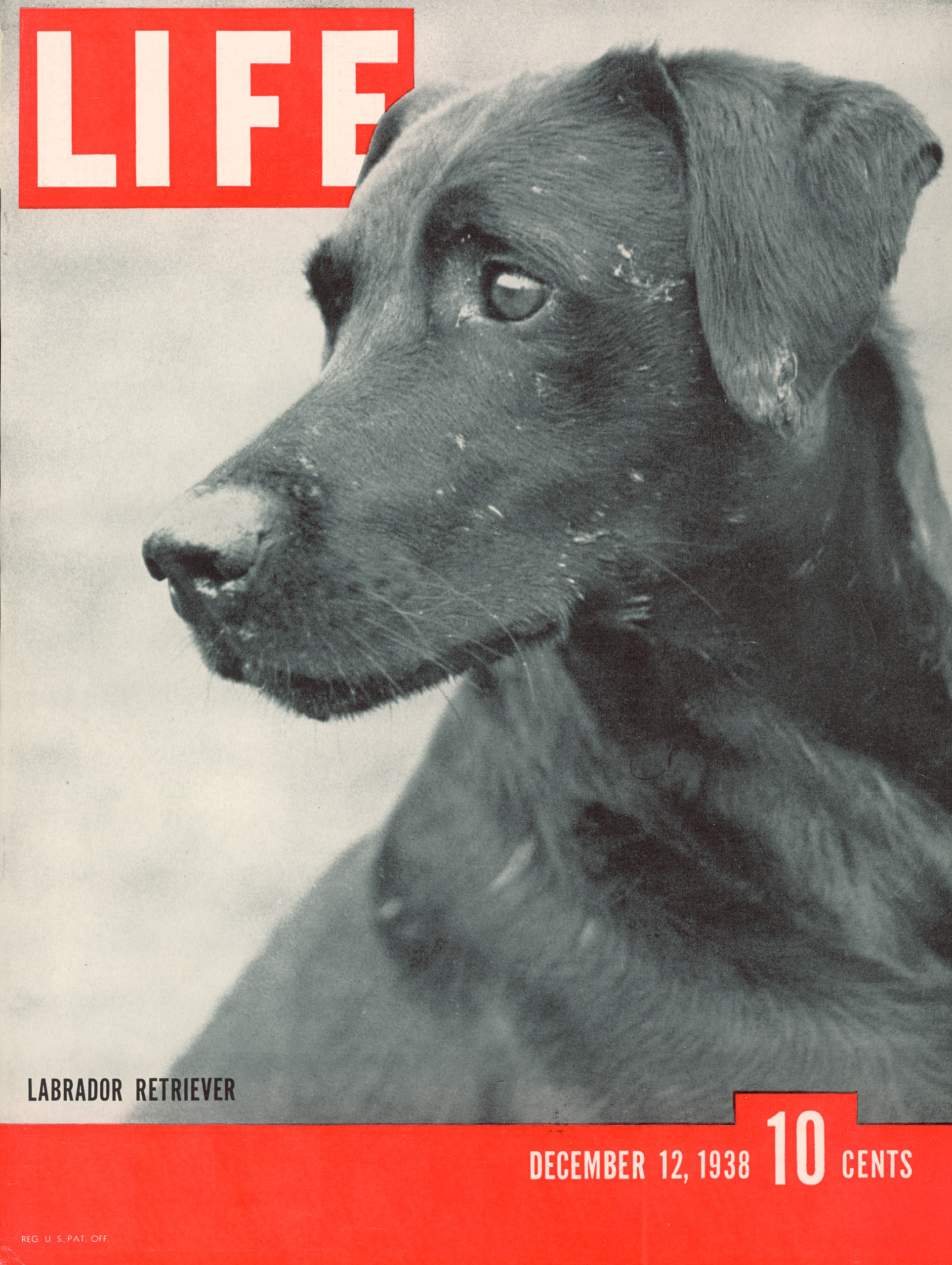 December 12, 1938 LIFE Magazine cover (photo by George Karger).
