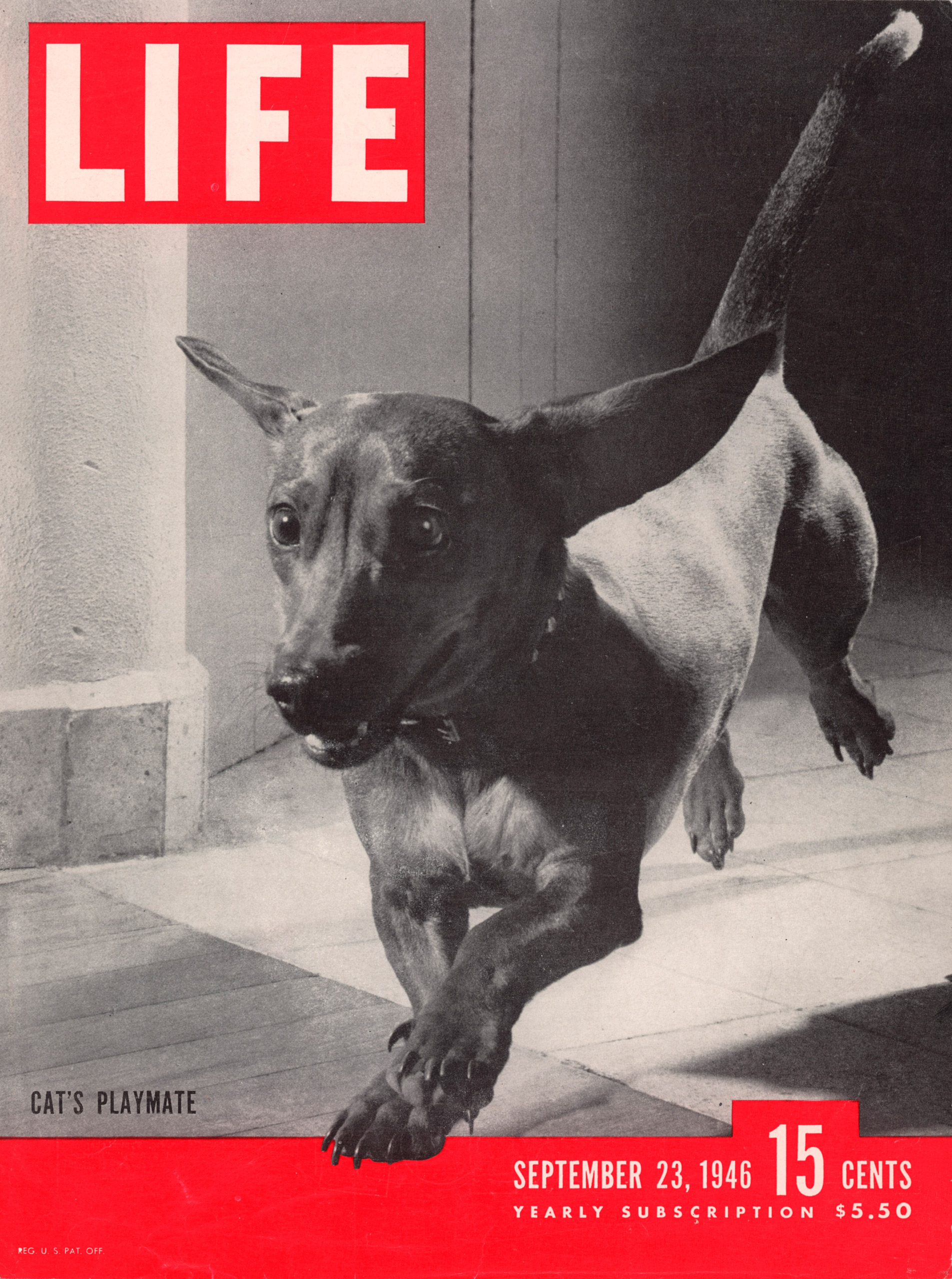 September 23, 1946 LIFE Magazine cover (photo by Frank Scherschel).