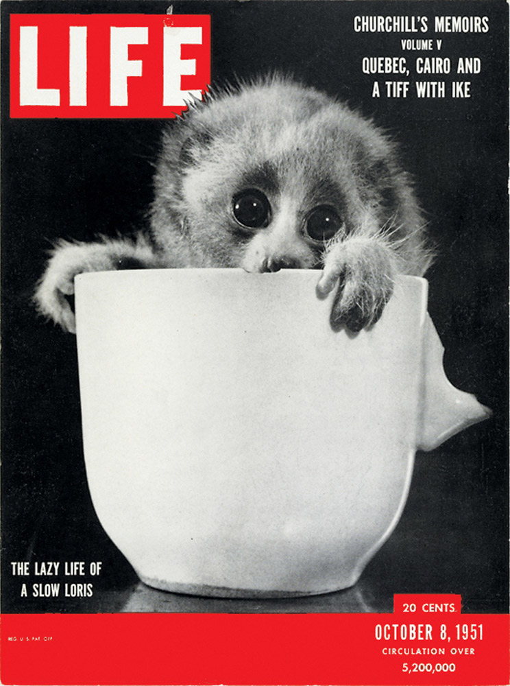 October 8, 1951 LIFE Magazine cover (photo by Burton Glinn).