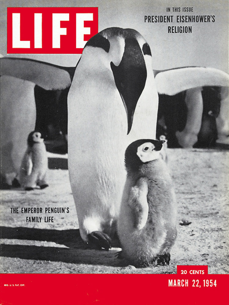 March 22, 1954 LIFE Magazine cover (photo by Roger Kirschner).