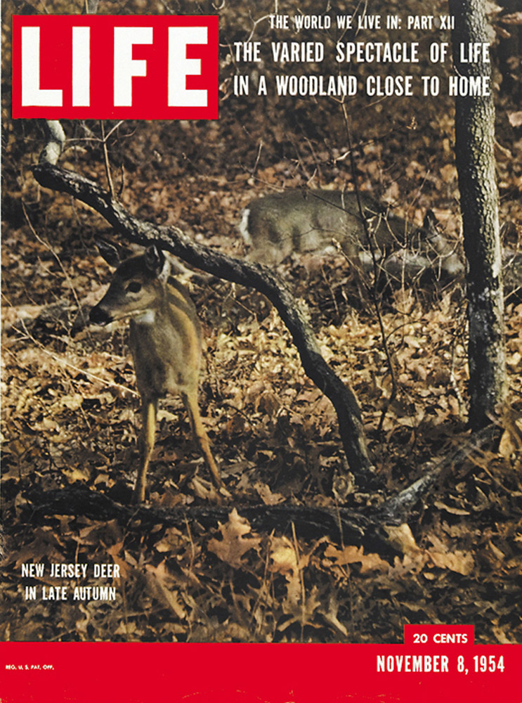 November 8, 1954 LIFE Magazine cover (photo by Gjon Mili).