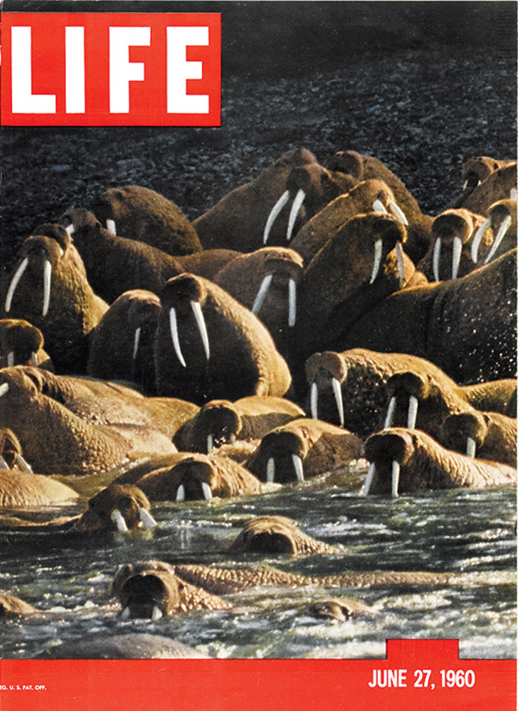June 27, 1960 LIFE Magazine cover (photo by Fritz Goro).