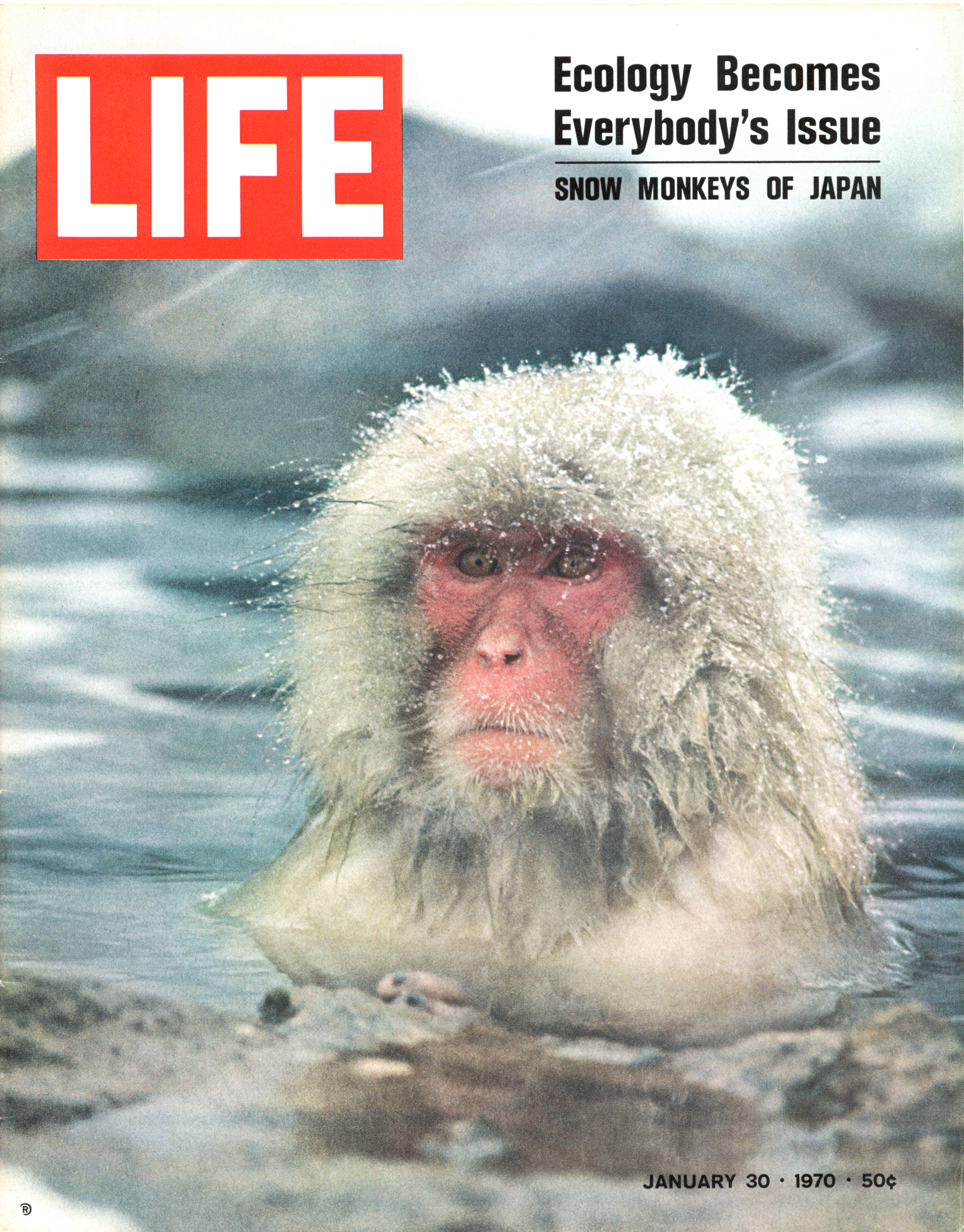 LIFE magazine cover of 01-30-1970 w. pic of snow monkey of Japan in water, by Co Rentmeester.