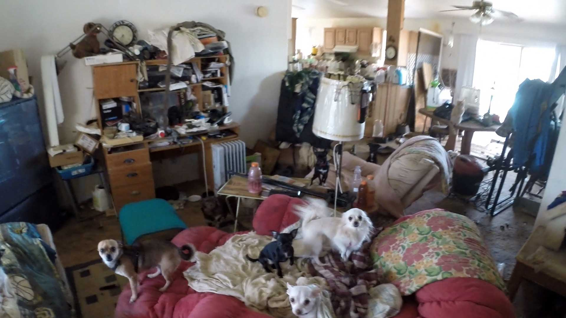 These animals were rescued from filthy conditions in an Arizona mobile home on Wednesday.