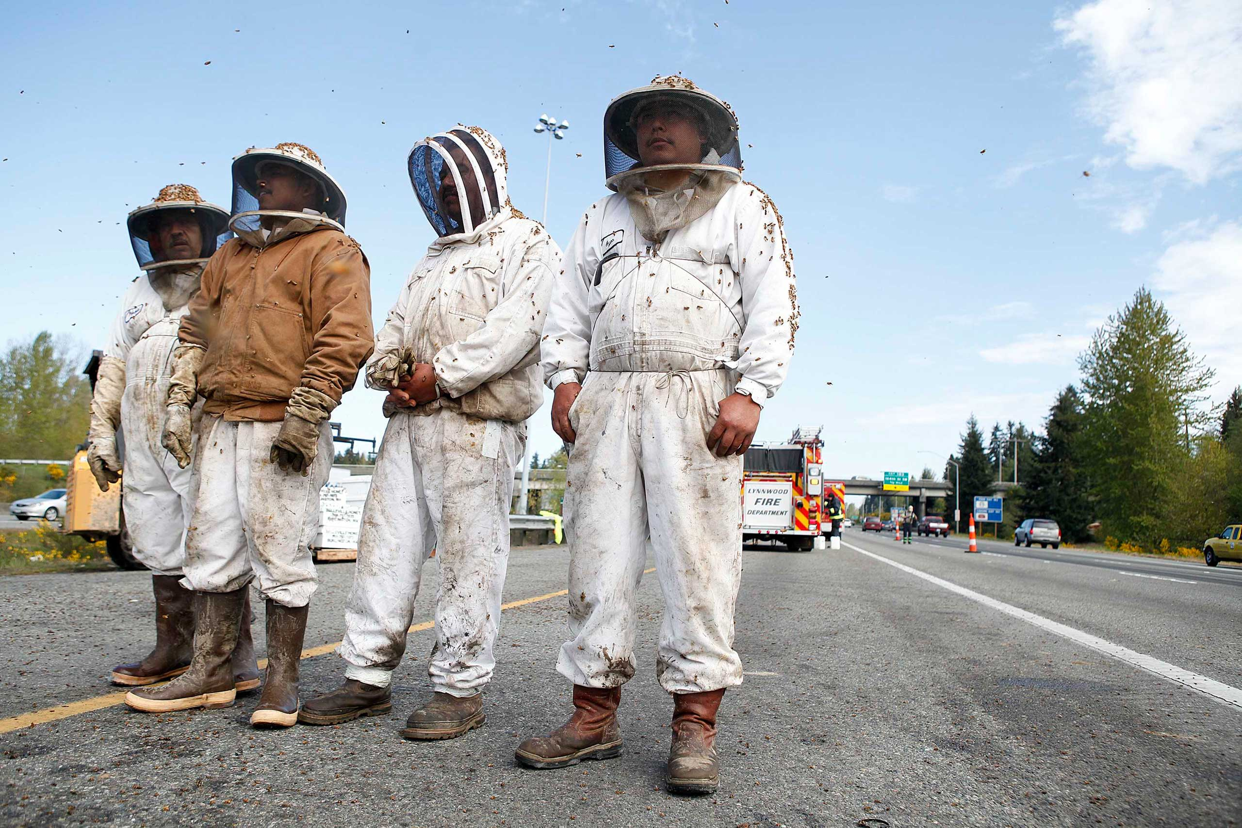 Beekeepers wait to start clearing out the scene of semi-trailer truck that overturned with a cargo of bees on a highway in Lynnwood, Wash., on Apr. 17, 2015.