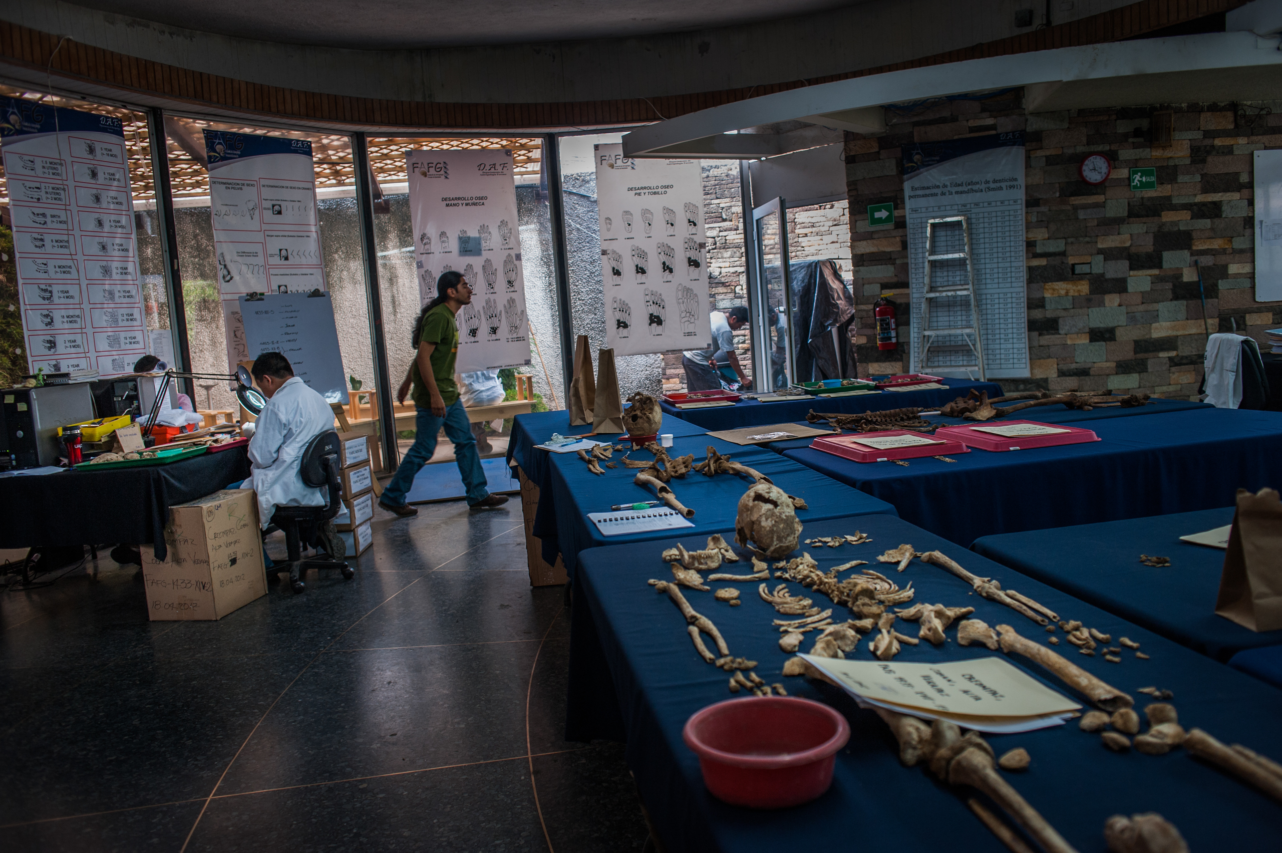 Skeletons are studied in the laboratory of the Fundación de Antropología Forense de Guatemala.