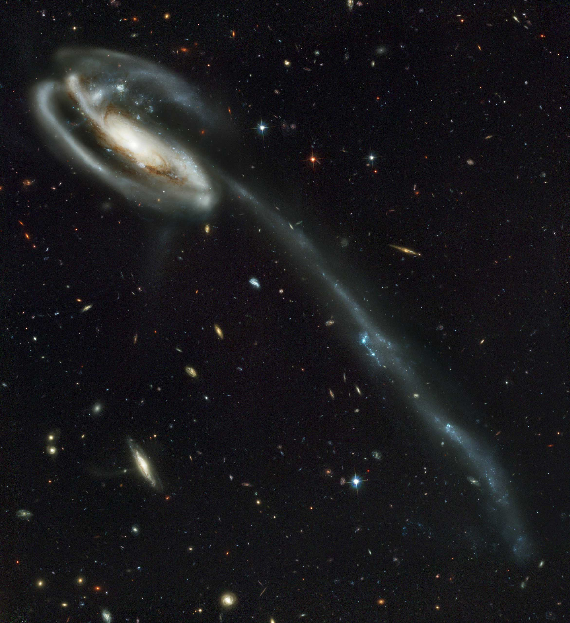 The Tadpole:                               The distorted shape of this spiral galaxy, also known as UGC 10214,  was caused by a small interloper, a very blue, compact galaxy visible in the upper left corner of the more massive Tadpole. The Tadpole resides about 420 million light-years away in the constellation Draco. Strong gravitational forces from the interaction created the long tail of debris, consisting of stars and gas that stretch out more than 280,000 light-years.                               Image released on April 30, 2002
