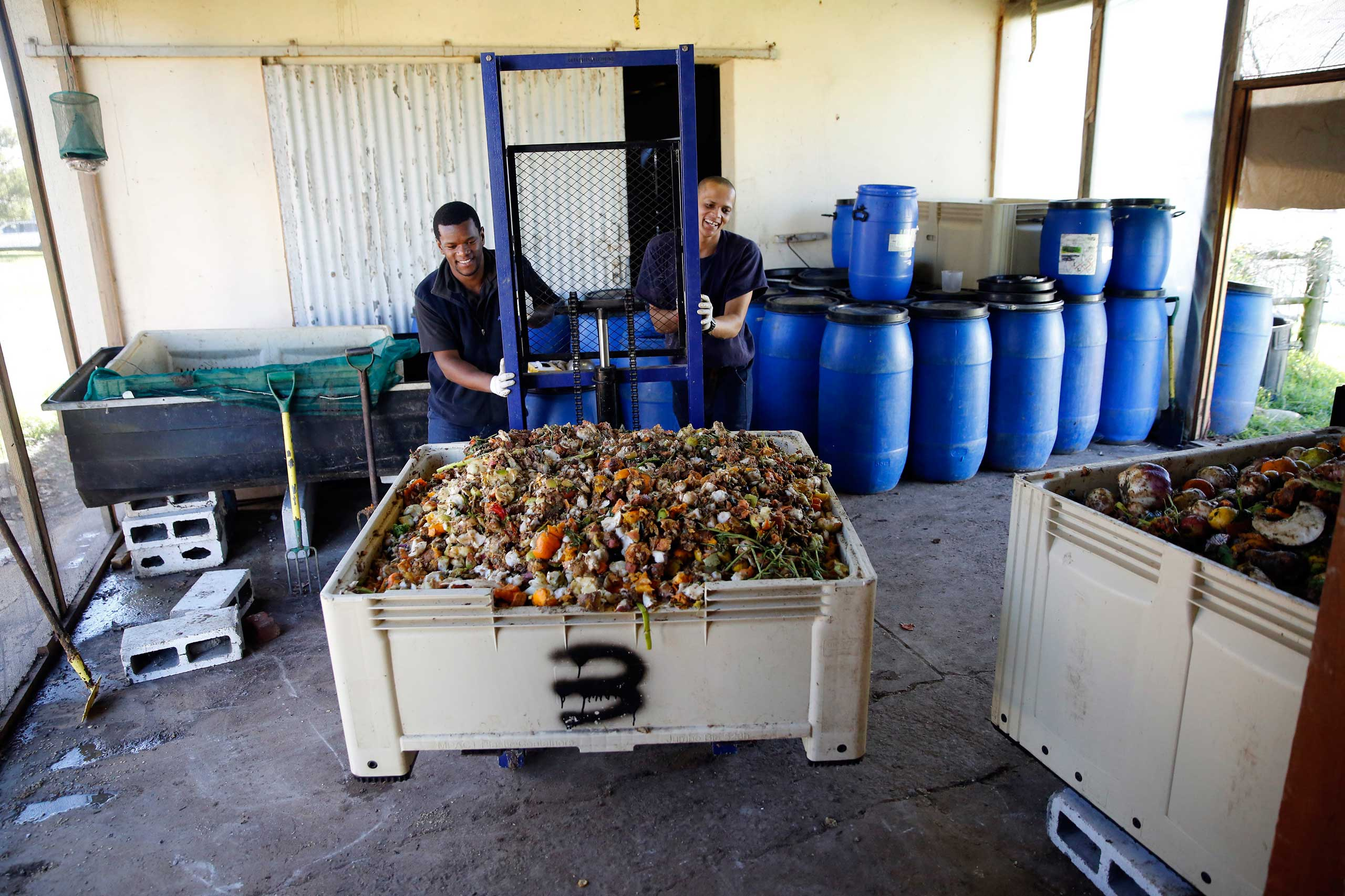 Workers push a container of recycled rotting vegetable matter used to feed larvae at the AgriProtein project farm near Cape Town, in 2014.
