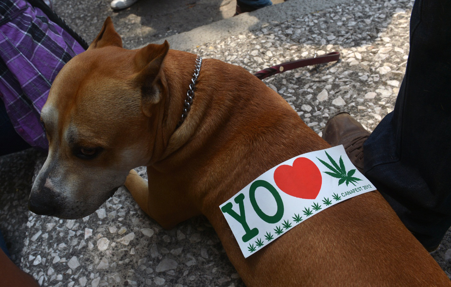 A sticker is seen on a dog's back during a demo in support of the legalization of marijuana in Mexico City on May 5, 2012.