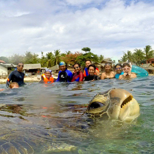 Friendly sea turtle crashes group photo in the Philippines at just the right moment.
