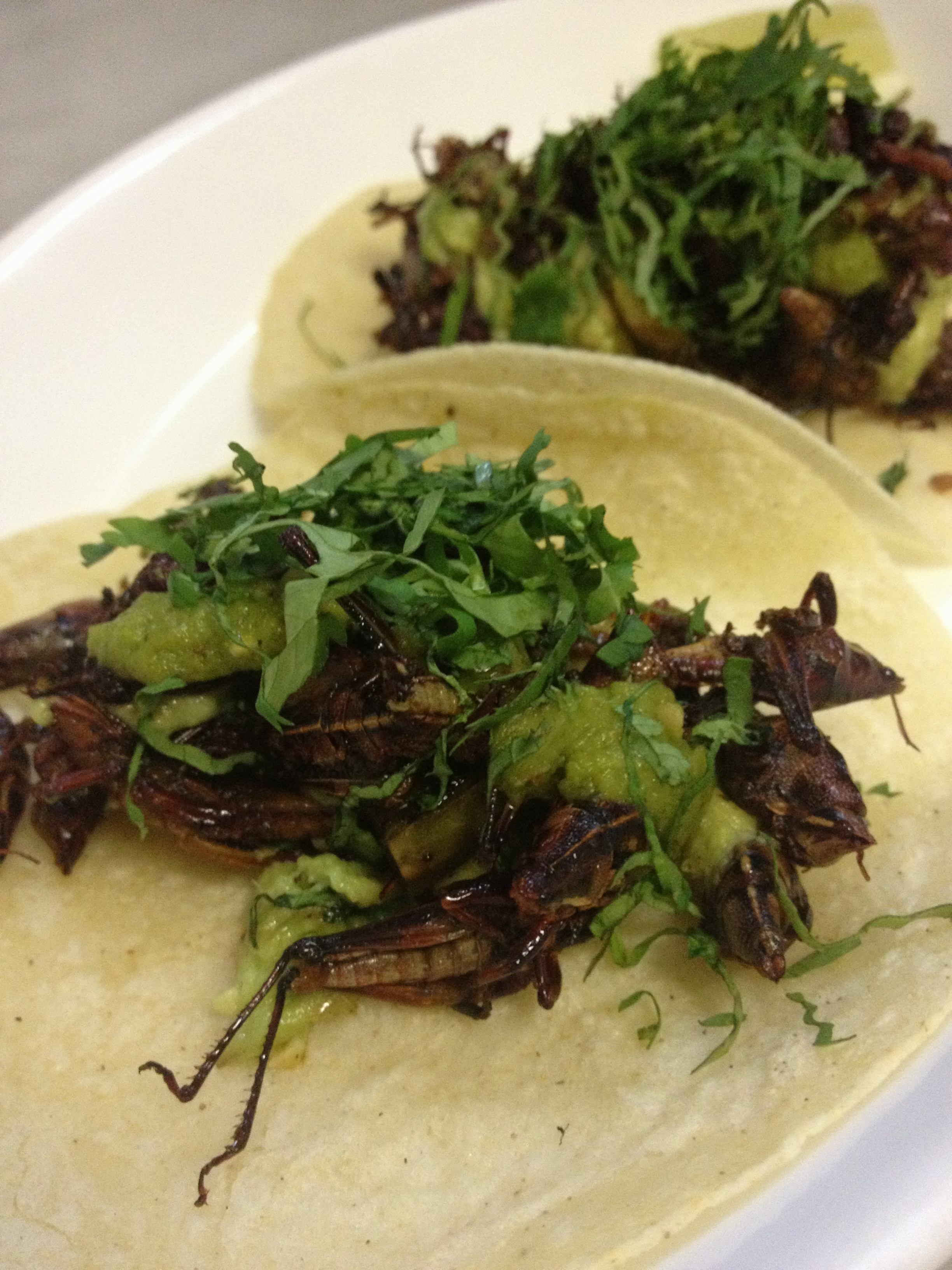 toloache tacos chapulines