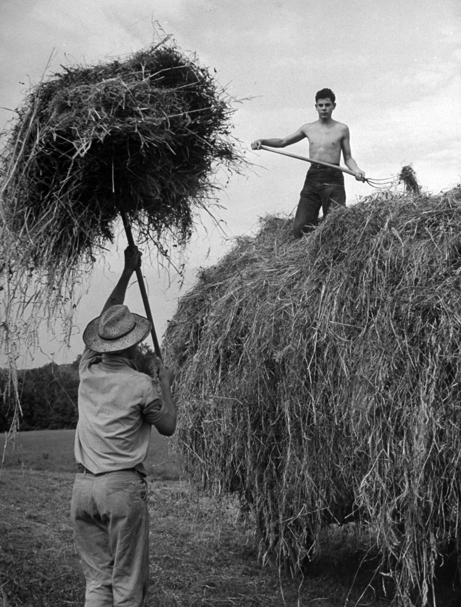 Land Corps volunteer, 16 year-old  Dick Sterne from Long Island, pitching hay atop a wagon on Ascutney Farm in Vermont.