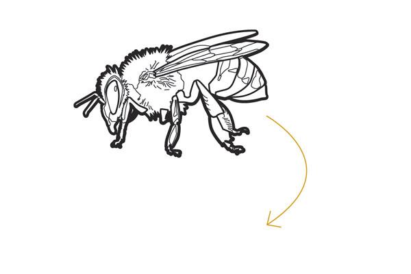 bee sayings bees knees