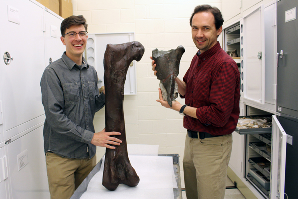 Dr. Christian Sidor (right), Burke Museum curator of vertebrate paleontology, and Brandon Peecook (left), University of Washington graduate student, show the size and placement of the fossil fragment compared to the cast of a Daspletosaurus femur.