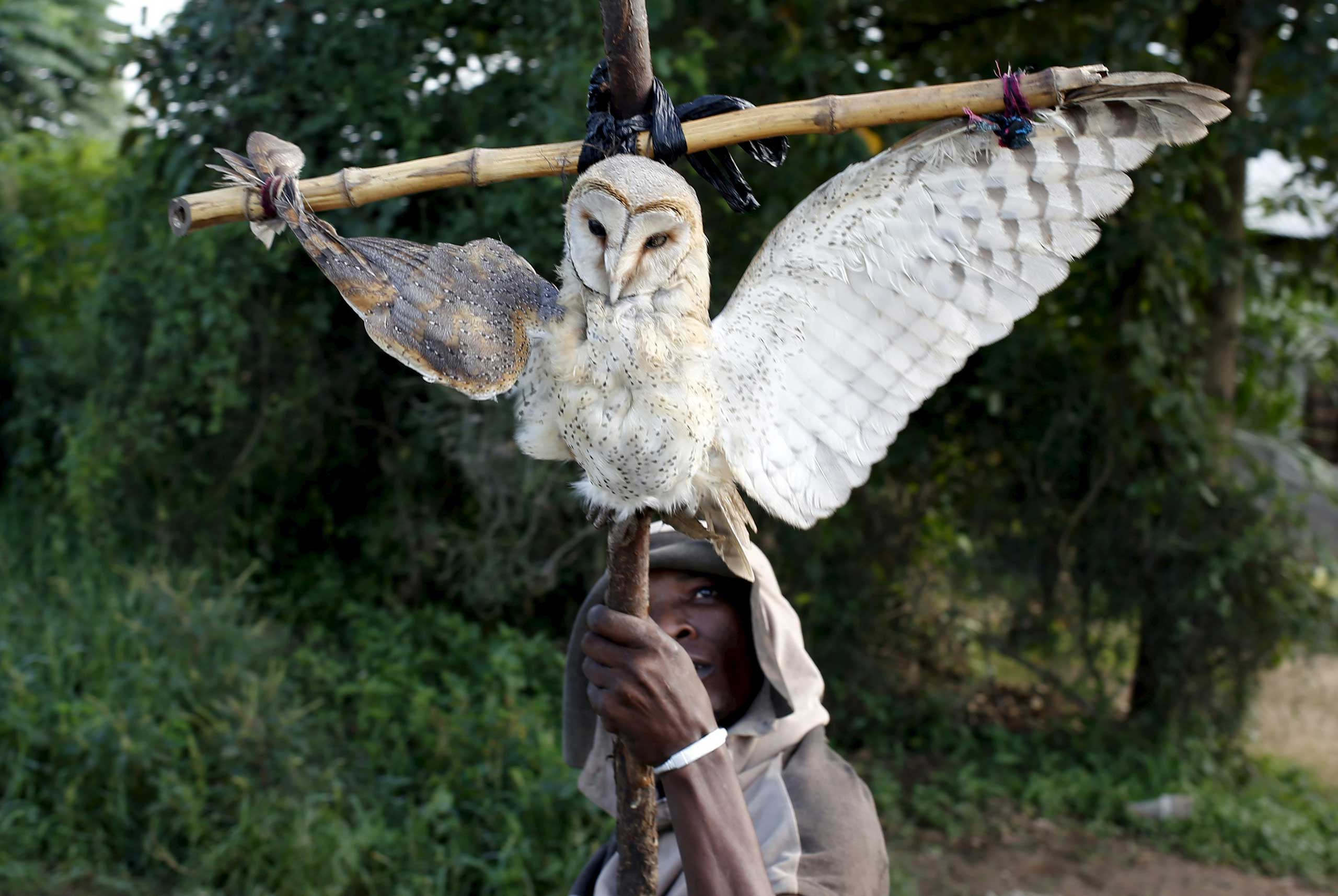 A protestor holds up a dead owl attached to a stick, intended to denigrate the ruling party whose emblem is an eagle, during a protest in Buterere neighbourhood of Bujumbura, Burundi on May 12, 2015.