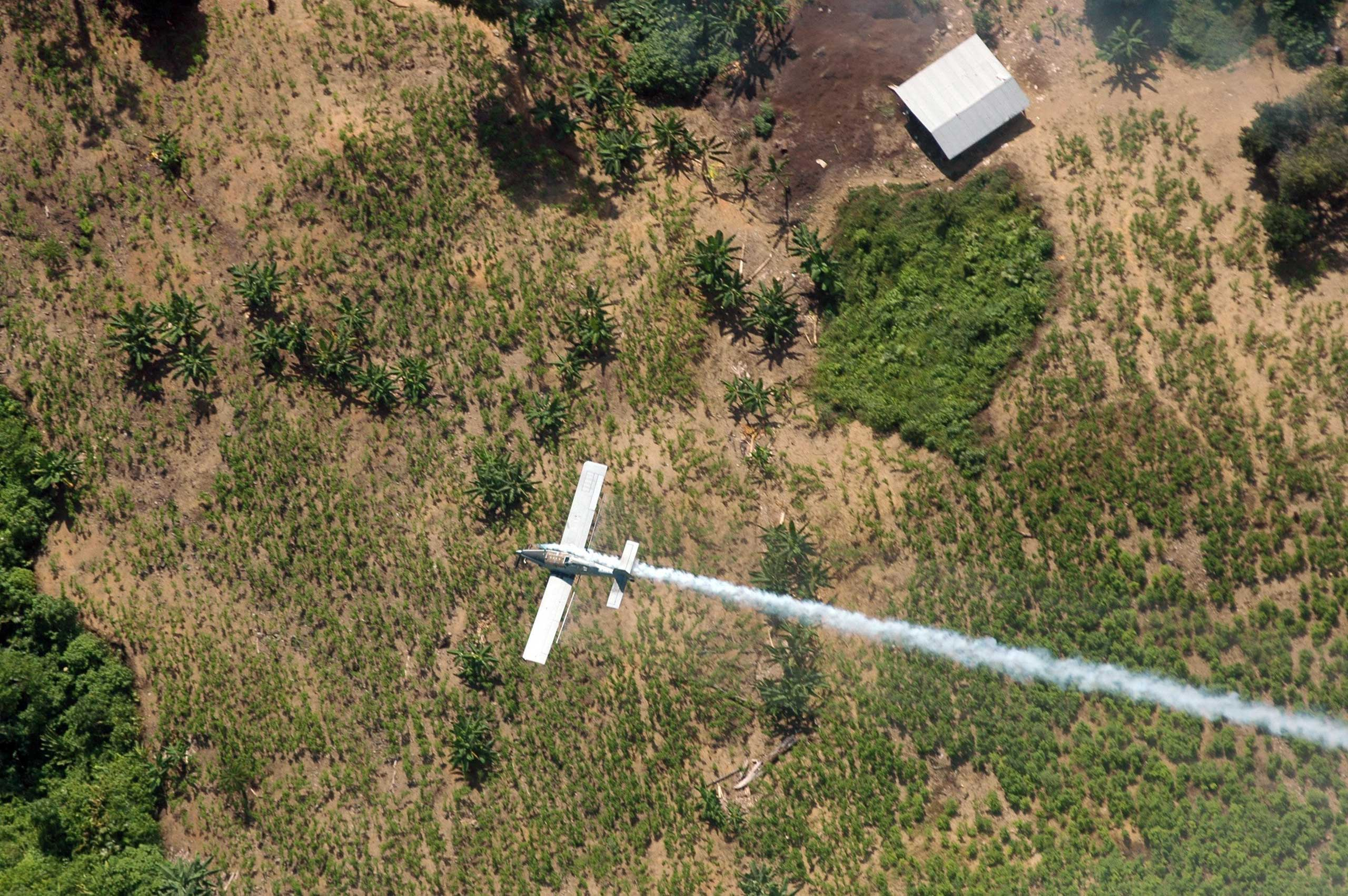 A police plane sprays herbicides over coca fields in El Tarra, in the Catatumbo river area of Colombia on June 4, 2008.