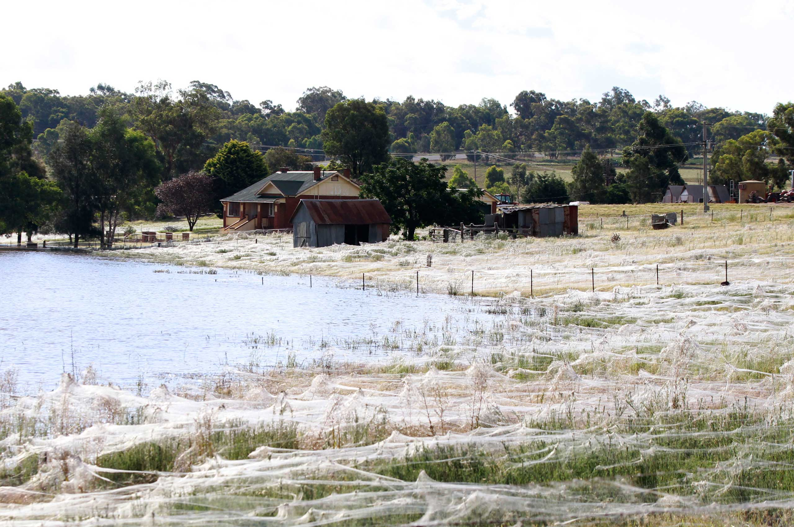 A house is surrounded by spiderwebs next to flood waters in Wagga Wagga, Australia.