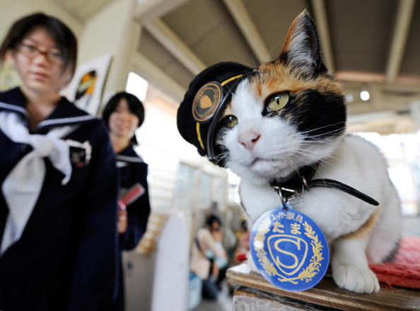 Schoolgirls admire Tama as the feline sits on a ticket gate at Kishi Station in the city of Kinokawa, in Wakayama prefecture, Japan, on May 22, 2008