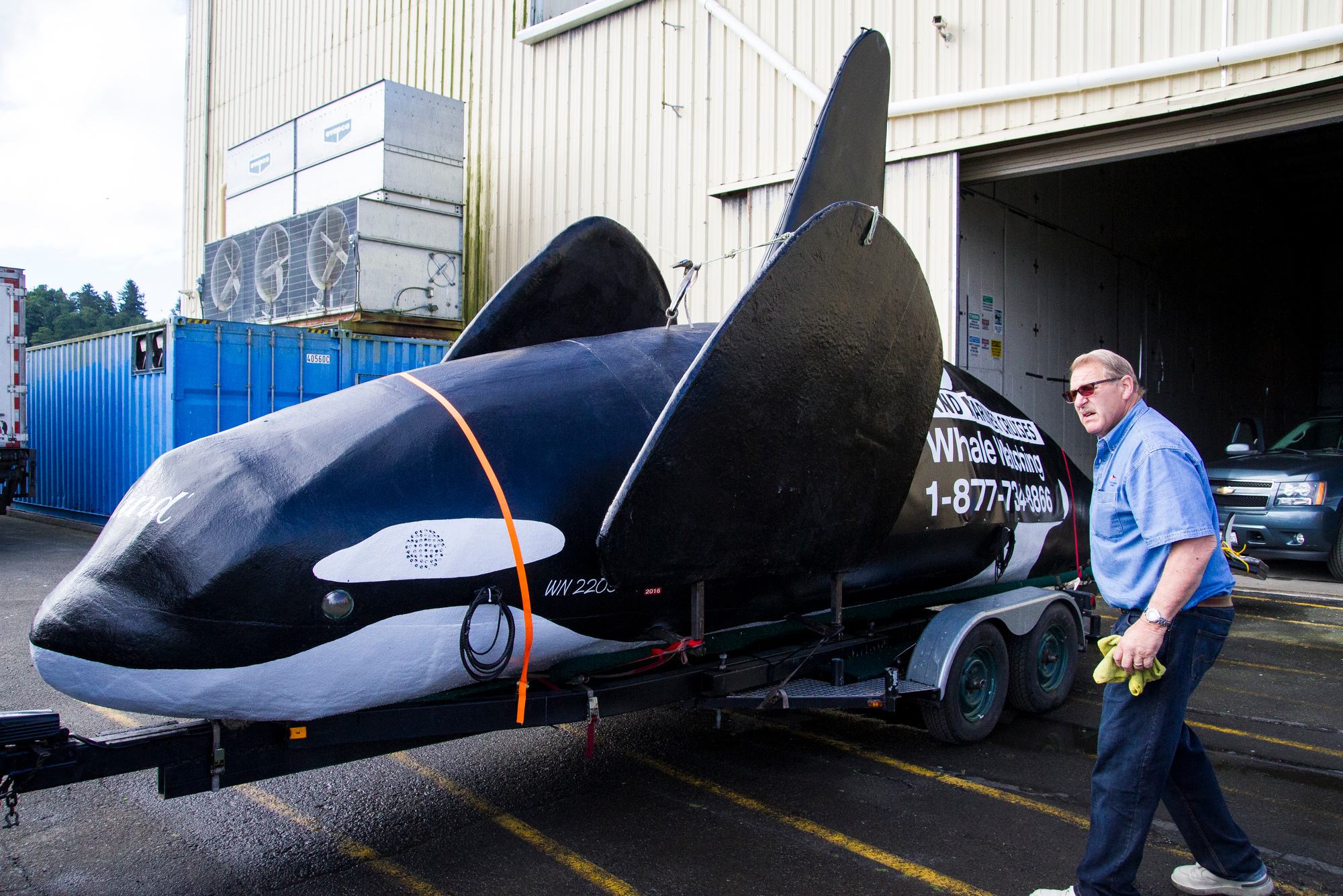 A fake life-sized orca sits on the docks of Pier Two in Astoria, Ore., Thursday, June 4, 2015