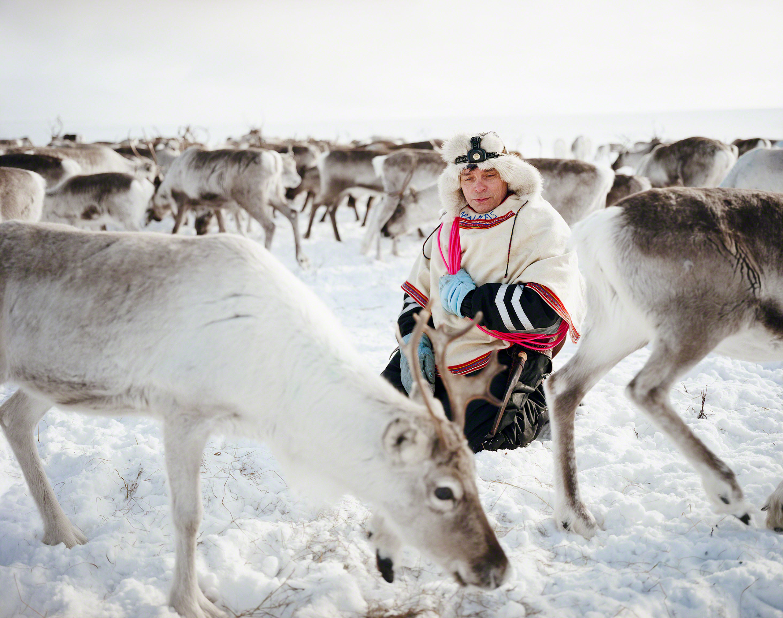 Among Buocut, 2009, from Sámi, Walking with Reindeer. Nils Peder, carrying a lasso color-coded for season and temperature, kneels calmly so as not to spook the reindeer herd on which his livelihood depends. The series depicts Sami herders who follow the migrations of reindeer across northern Scandinavia throughout the year.