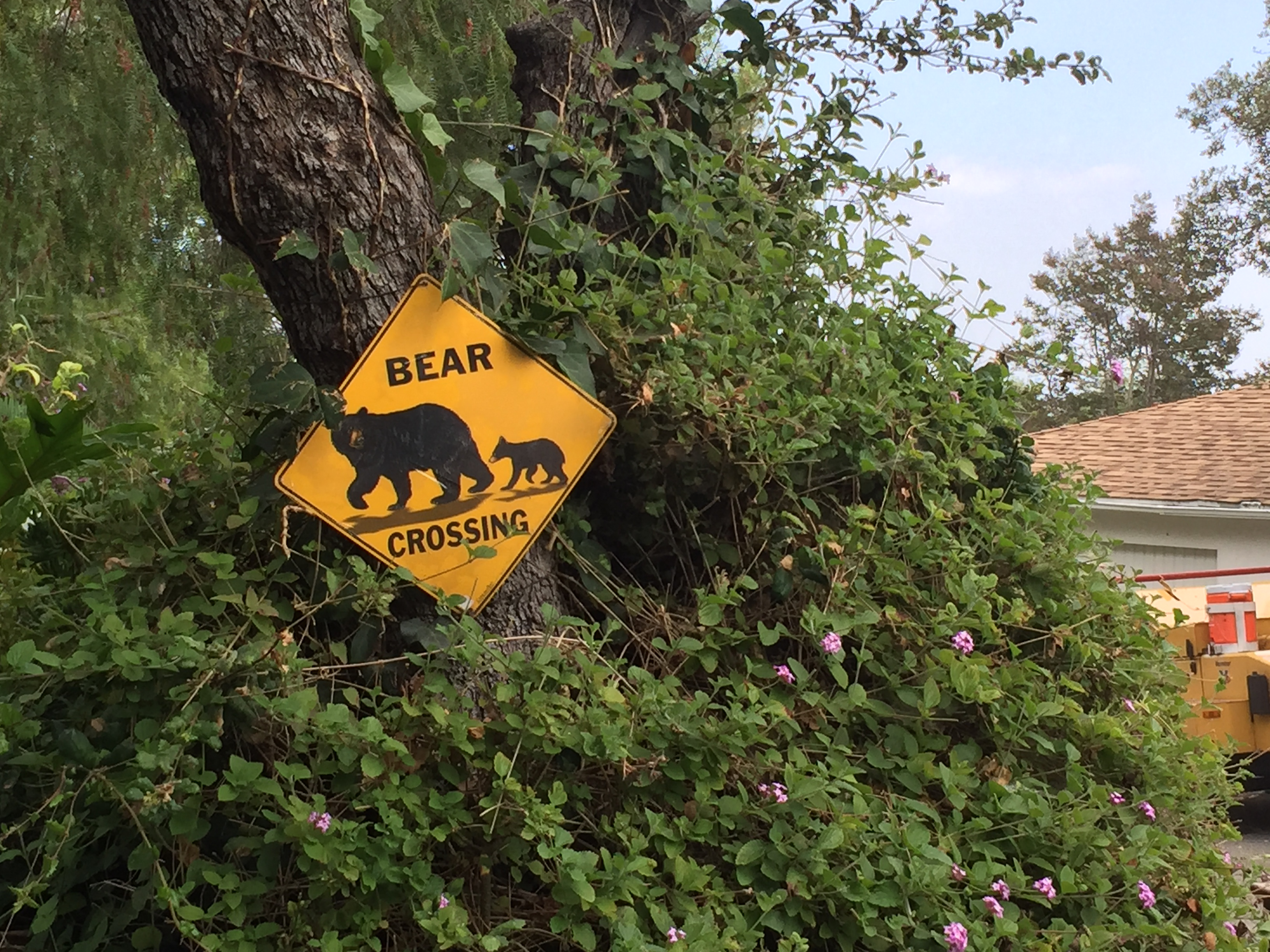 A bear crossing sign on the side of the road in Monrovia, Calif.