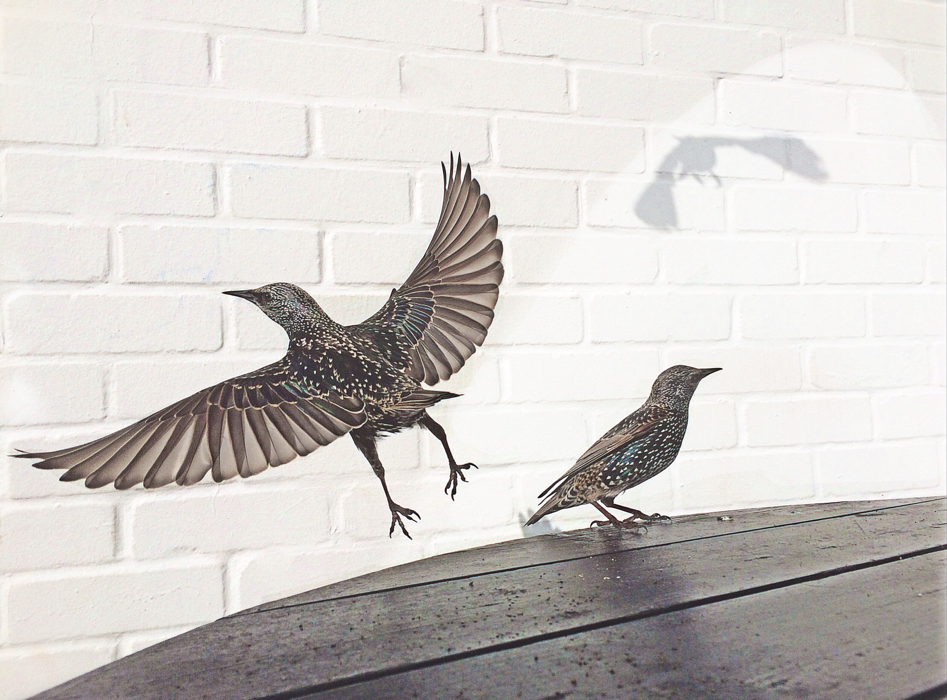 Photographers of the Year iPhone Photography Awards.                                                              Second place,  Cafe Birds.