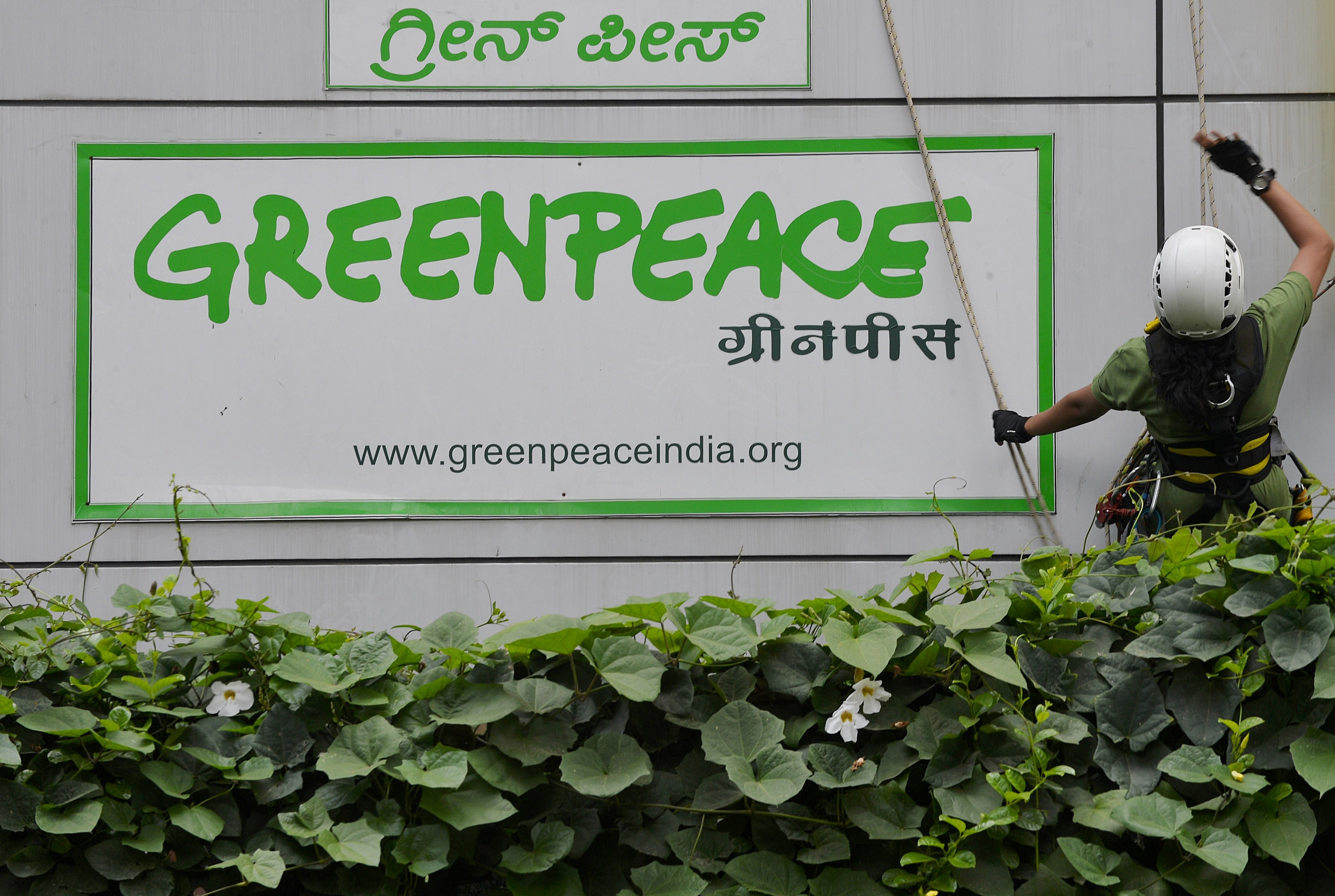 Activists of GreenPeace rappell down the office building where they are headquartered to unfurl banners 'democracy' and 'freespeech' in Bangalore on May 15, 2015.