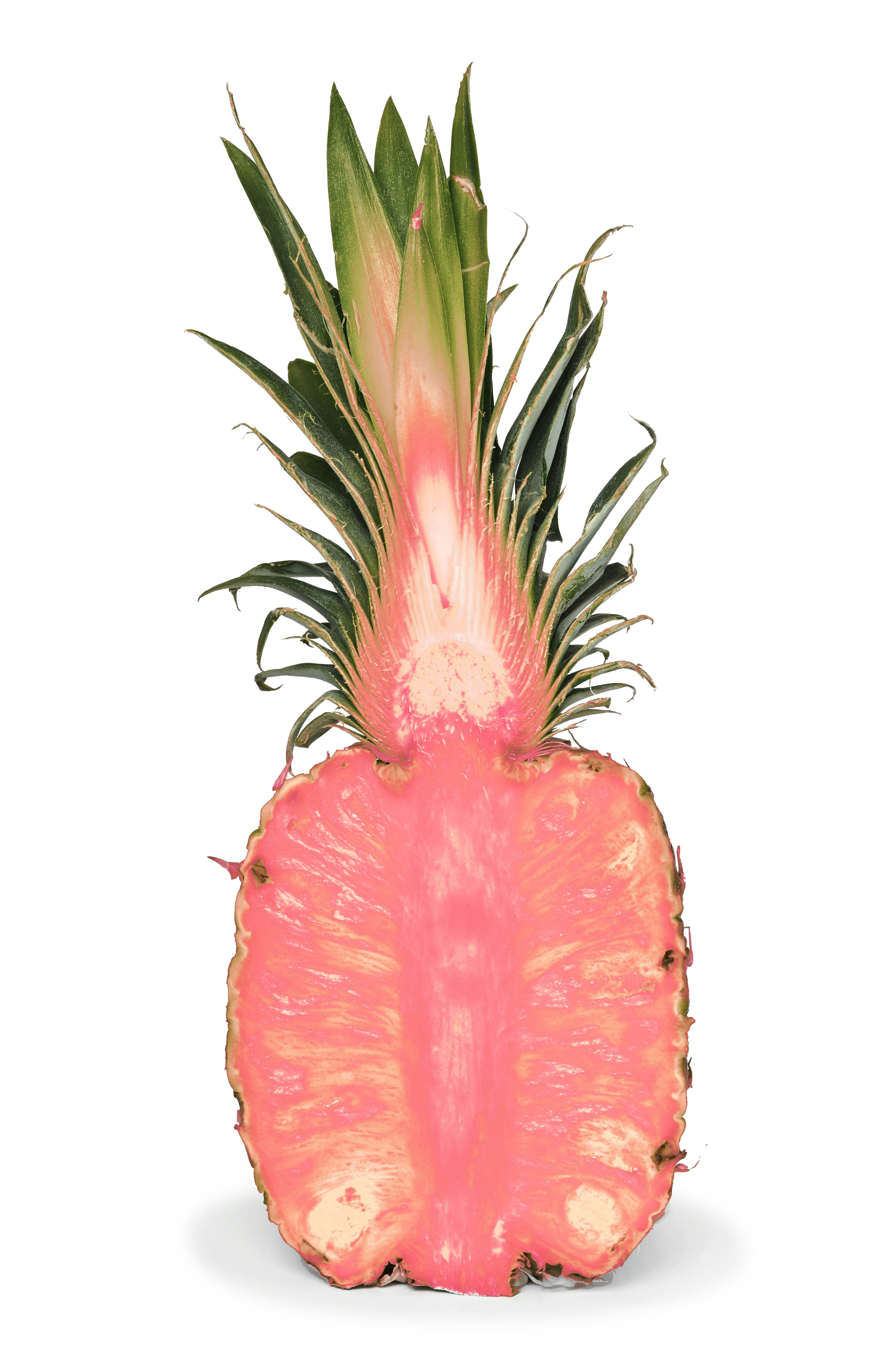 This photo-illustration depicts what we imagine the pink pineapple will look like if it makes it onto store shelves.