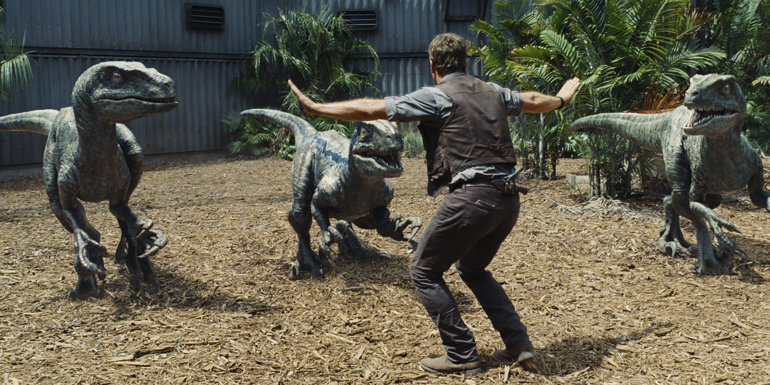 Chris Pratt as Owen in a scene from Universal Pictures' Jurassic World.