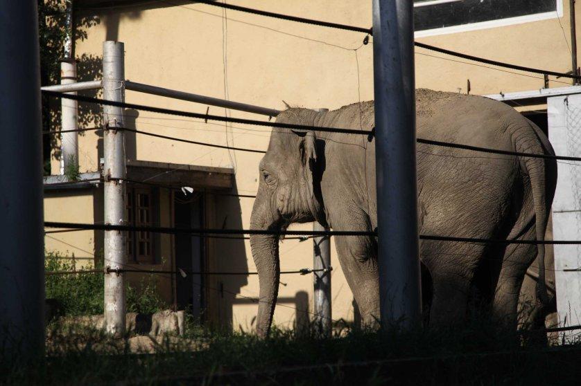 Georgia Flooding Zoo Animals Escaped