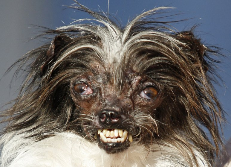 ugly dog competition