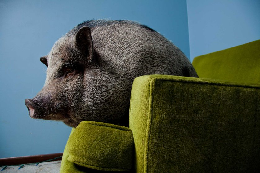vincent-musi-animals-look3