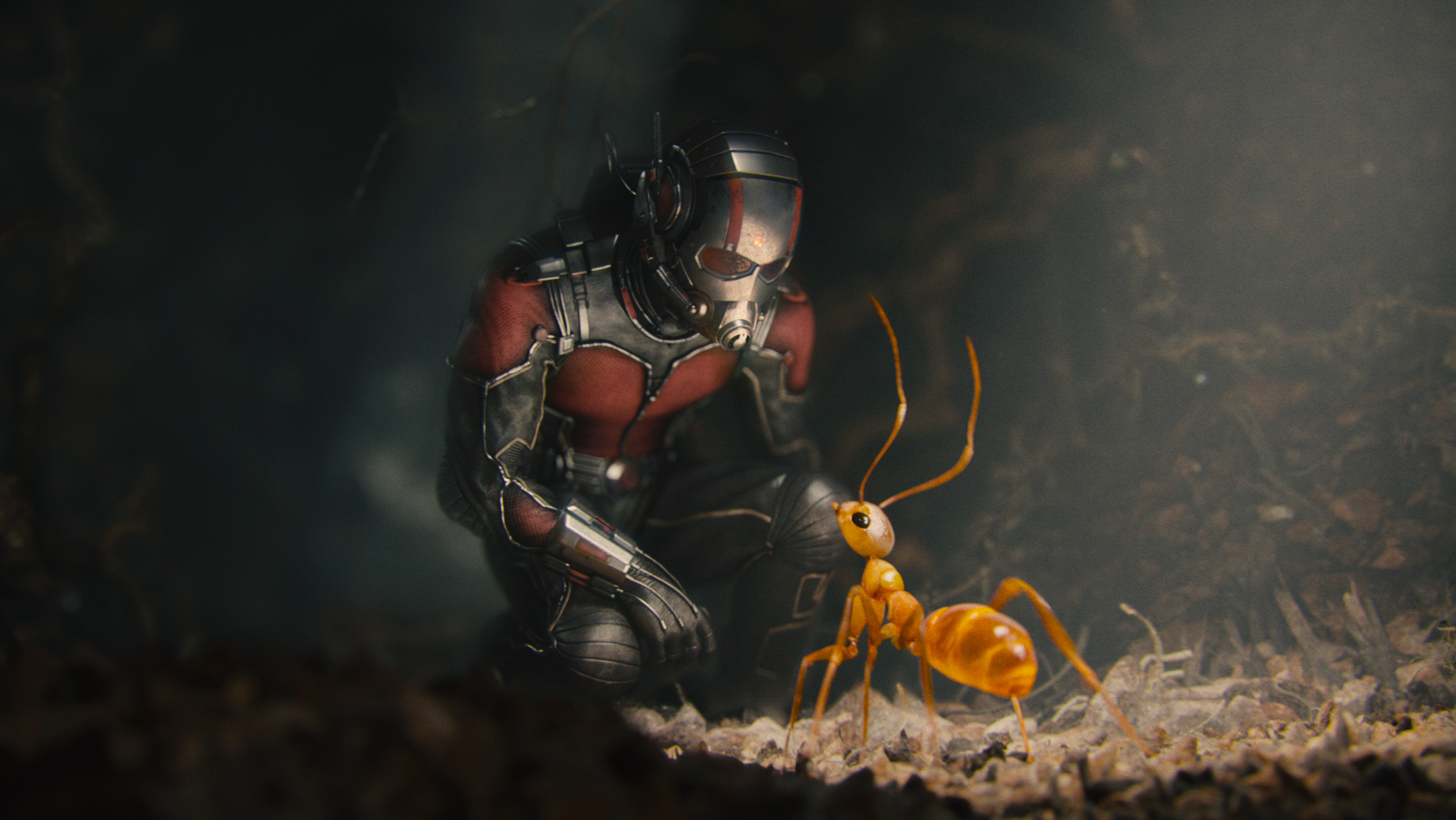 Ant-Man/Scott Lang (Paul Rudd) with one of his crazy ants.