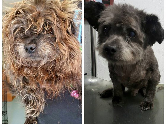 Chester before and after he arrived at the shelter.