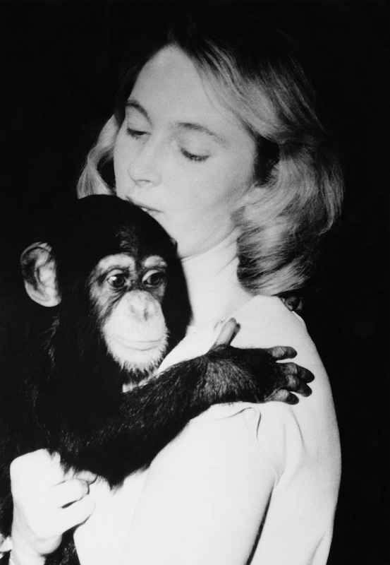 Jane Goodall at the National Zoo in Washington D.C. with the zoo's 11-month-old chimpanzee Lulu, Feb. 29, 1964.
