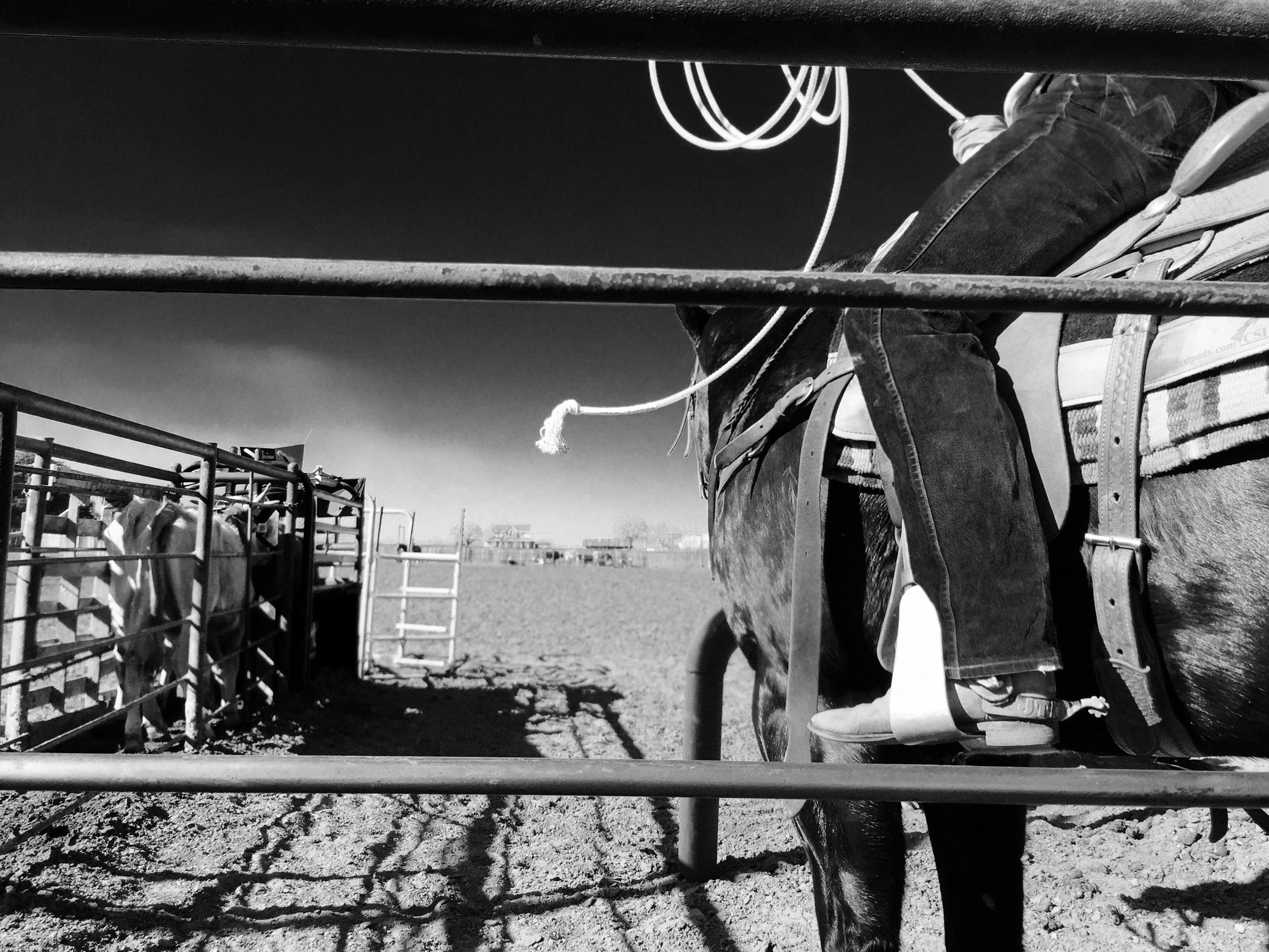 Texas cowboy on a Texas ranch.