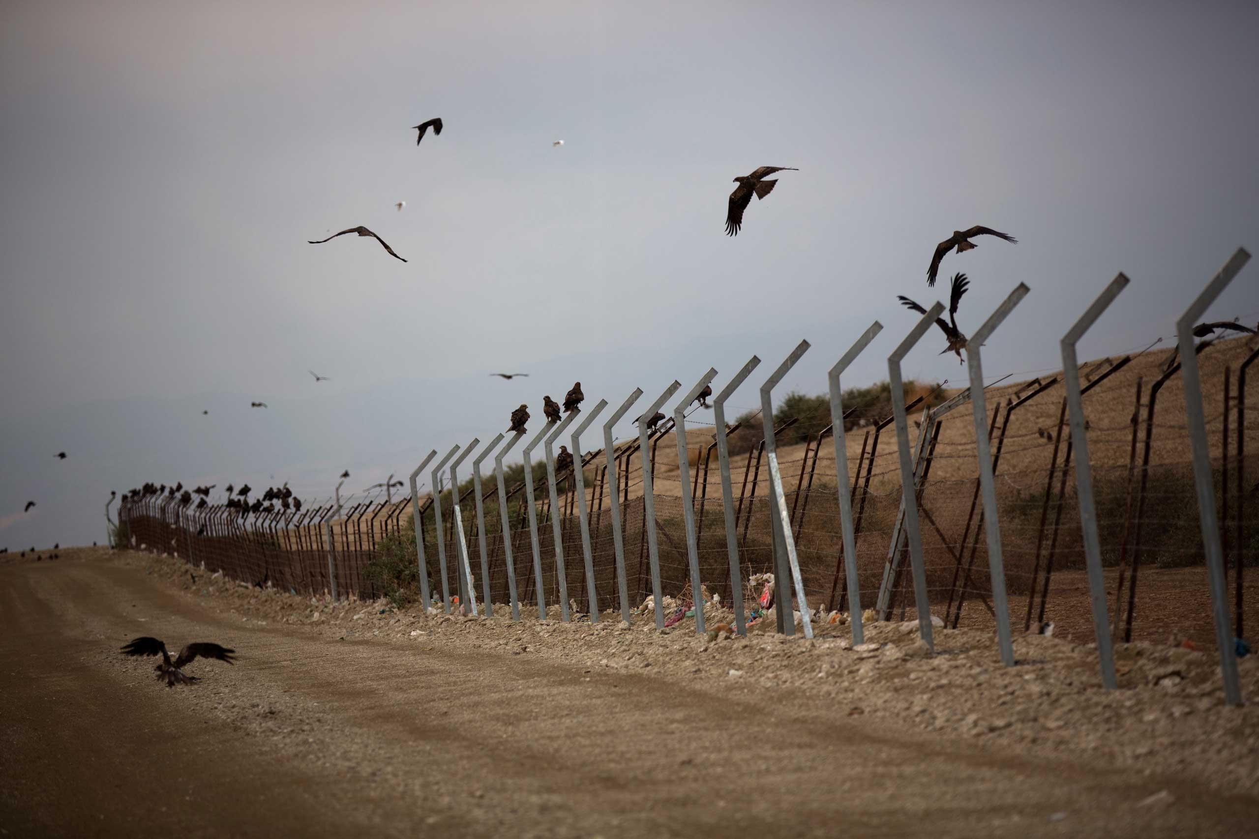 Birds fly over the border fence that divides Israel and Jordan in the Jordan Valley, in the Israeli occupied Palestinian West Bank, on Feb. 16, 2014.