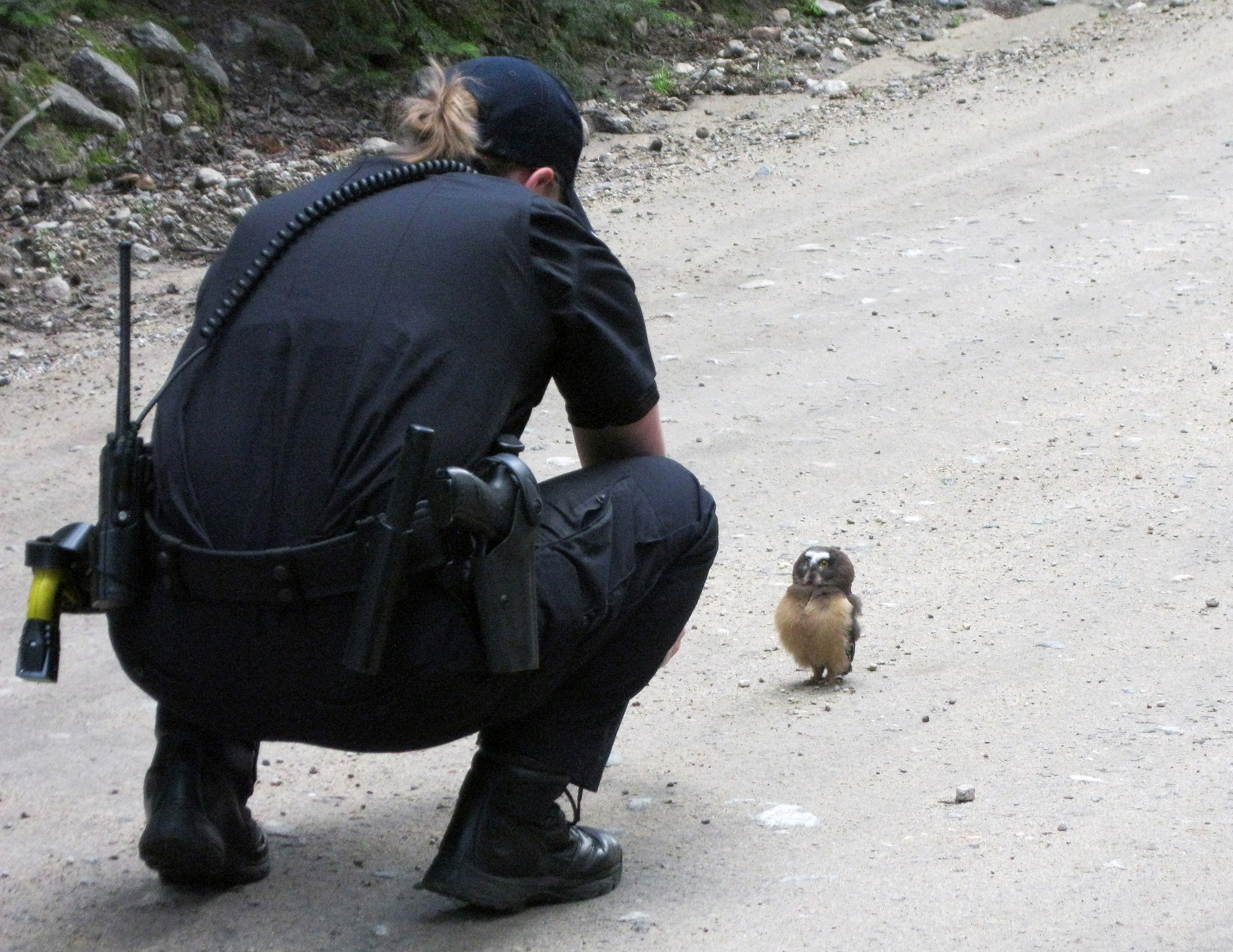 In this July 21, 2015 photo, provided by the Boulder County Sheriff's Office, Deputy Sophie Berman crouches over a small owl, making a brief video before the bird flew away, near Rainbow Lakes, outside Nederland, Colo.