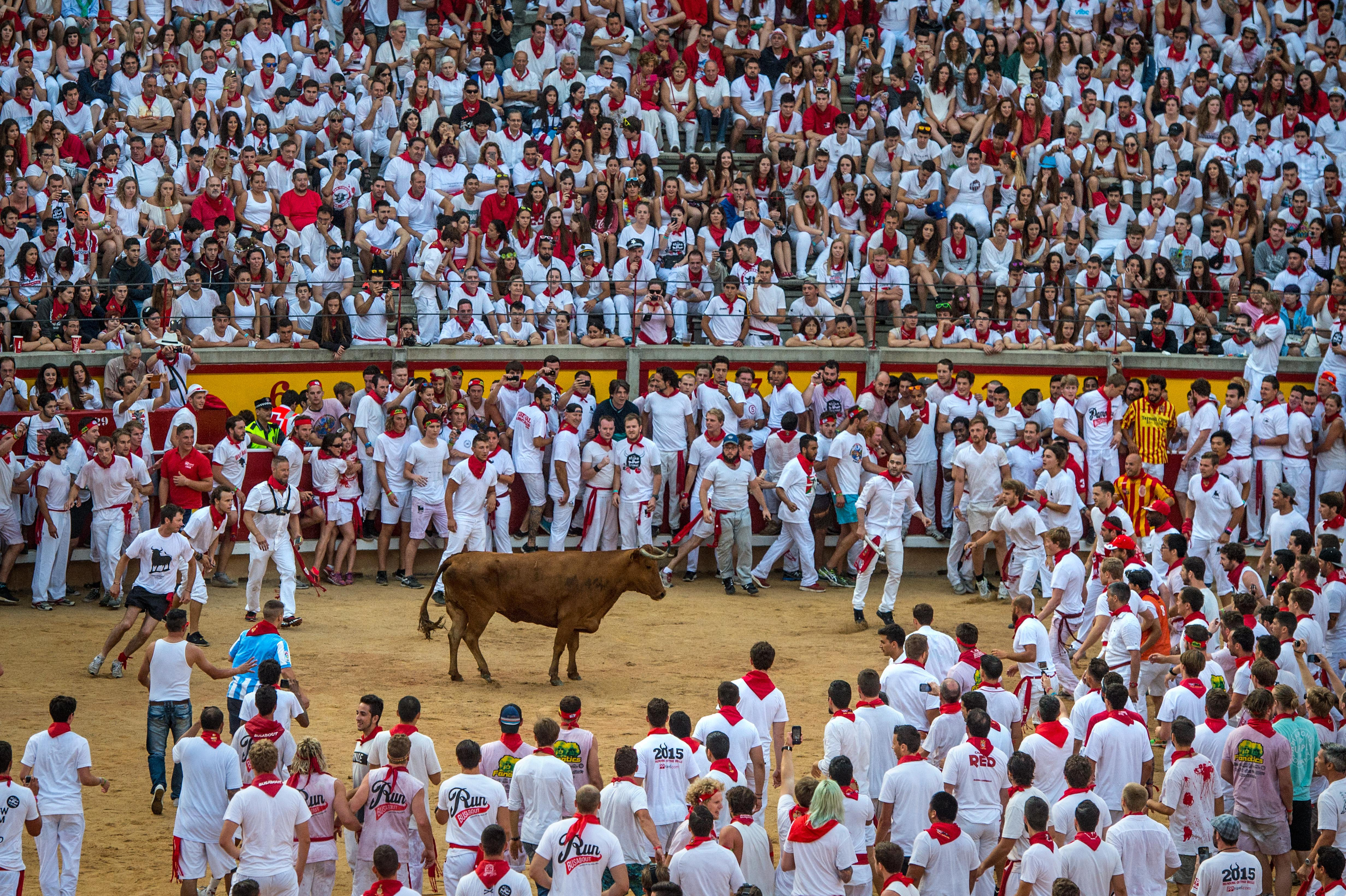Revellers attempt to avoid a fighting calf inside Pamplona bullring during the second day of the San Fermin Running of the Bulls festival on July 7, 2015 in Pamplona, Spain.